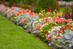 Flowerbed in park Stock Photo