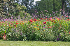 Flowerbed in the park Royalty Free Stock Images