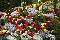 Flowerbed in the Park in the market town of Sandbach England Royalty Free Stock Photography