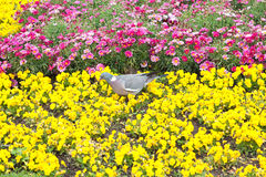 The flowerbed with pigeon Stock Photo