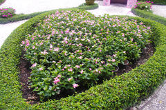Flowerbed with pink flowers; Stock Photography