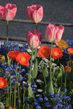 Flowerbed with pink tulips and multicolored garden flowers Royalty Free Stock Photos