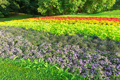 Flowerbed in rainbow colors Stock Images