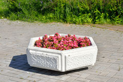 Flowerbed with red flowers. Royalty Free Stock Photo