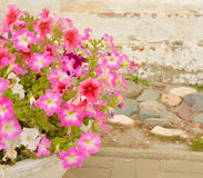 Flowerbed with red flowers. Stock Images