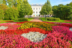 Flowerbed with red flowers. Royalty Free Stock Images