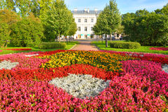 Flowerbed with red flowers. Stock Photo