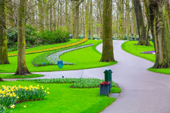 Flowerbed with red tulips, yellow daffodil flowers blooming in spring Stock Photo