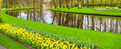 Flowerbed with red tulips, yellow daffodil flowers blooming in spring Stock Photos