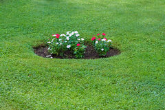 Flowerbed with red and white flowers Royalty Free Stock Photography