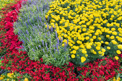 Flowerbed with red and yellow flowers Royalty Free Stock Photos