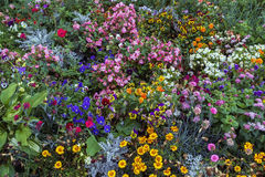 Flowerbed, Russia Stock Photo
