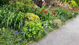 Flowerbed with spring flowers  Royalty Free Stock Photography