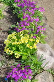 Flowerbed with spring flowers Stock Photography