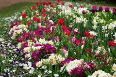 Flowerbed. Spring flowerbed in Hyde park royalty free stock photo