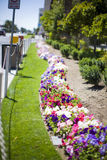 Flowerbed on the street Stock Photography