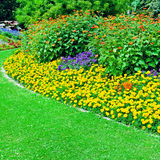 flowerbed in summer park Stock Photography