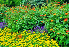 flowerbed in summer park Stock Images