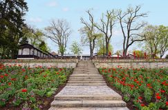 Flowerbed of tulips on stairs at Marienberg mountain above the c. Brandenburg an der Havel, Brandenburg/ GERMANY: April 25 2015: Flowerbed of tulips on stairs at Royalty Free Stock Images