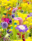 Flowerbed with various summer flowers royalty free stock photography