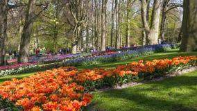 Flowerbed w De Keukenhof Zdjęcia Royalty Free