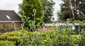 Flowerbed w parku w targowym miasteczku Sandbach Anglia Obraz Stock