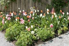 Flowerbed w wiośnie Zdjęcia Royalty Free