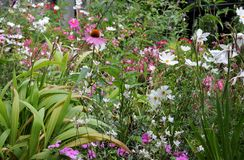 Flowerbed with wonderful blooming summer flowers. Flowerbed with wild growing white and pink summer flowers stock photo