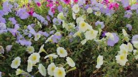 Flowerbed with wonderful flowers. Flowerbed with various wonderful flowers stock footage