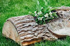 Flowerbed of wood. Original flowerbed of wood and growing flowers on a flower bed Royalty Free Stock Image