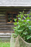Flowerbed and wooden log house on background Stock Photos
