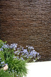 Flowerbed z agapanthus na brown tle Fotografia Stock