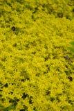Flowerbed z bumblebees i dragonflies zdjęcia stock
