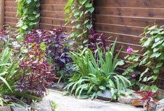Flowerbed z dekoracyjnymi roślinami Zdjęcie Stock