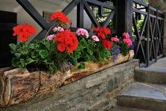 Flowerbed z koloru bodziszkiem na wysokogórskiej domowej fasadzie Fotografia Stock