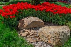 Flowerbed z tulipanami w ogródzie Obrazy Stock
