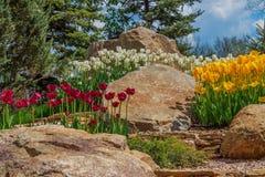 Flowerbed z tulipanami w parku Obraz Royalty Free
