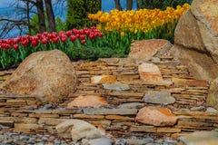 Flowerbed z tulipanami w parku Fotografia Royalty Free