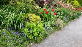 Flowerbed z wiosna kwiatami Fotografia Royalty Free