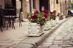 Flowerbeds σε Lviv στοκ φωτογραφίες
