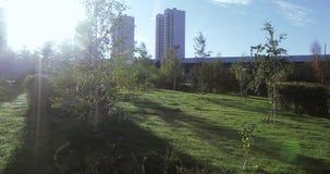 Flowerbeds и деревья с кустами в городе паркуют сток-видео