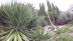 Flowerbeds с пальмами видеоматериал