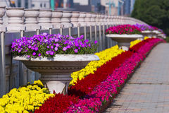 Flowerbeds Stock Image