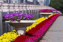 Flowerbeds imagem de stock