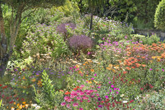 Flowerbeds Abbey Garden, Tresco. Flowerbeds in Abbey Garden, Tresco Isles, Scilly Islands, England. The gulf stream is responsible for the warm climate royalty free stock image