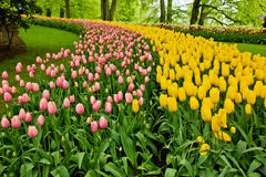 Flowerbeds coloridos fotos de stock royalty free