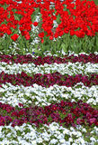 Flowerbeds coloridos fotografia de stock royalty free