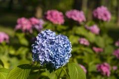 Flowerbeds coloridos de florescência imagem de stock