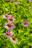 Flowerbeds coloridos de florescência fotografia de stock