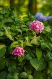Flowerbeds coloridos de florescência fotos de stock royalty free